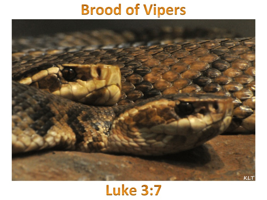 Brood of Vipers