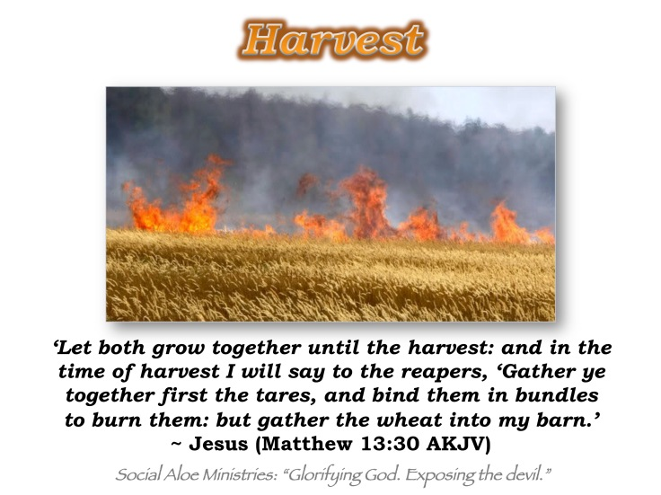 harvest-fact-from-fiction